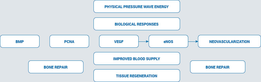 Pressure Wave Therapy Treatment Technology